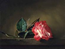 3404_55х45_А.Н.Антонов - Красная роза
