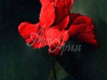 3407_60х45_А.Н.Антонов - Роза