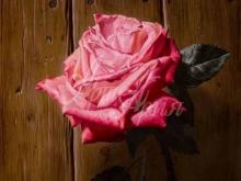 3419_65х49_А.Н.Антонов - Розовая роза