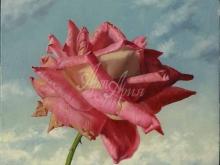 3436_70х56_А.Н.Антонов - Розовая роза