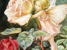 8051_44х30_С.М.Барке - Розовая фея