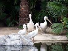 thumbs 7132 60x45 flamingo Фото искусство