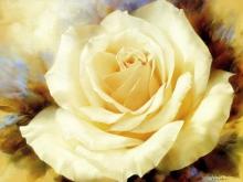 Игорь Левашов. Белая роза III