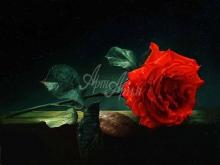 3427_70х52_А.Н.Антонов - Красная роза