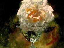3431_70х54_А.Н.Антонов - Белая роза