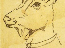 diego-rivera-head-of-a-goat