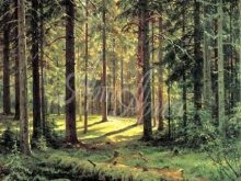 2403_И.И.Шишкин - Хвойный лес
