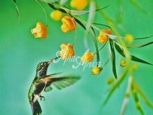6045_40x48 Колибри с желтым цветком