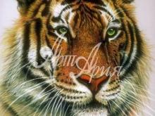 6052_60x40 Тигр с зелеными глазами