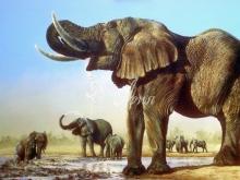 6055_60x40 Племя слонов