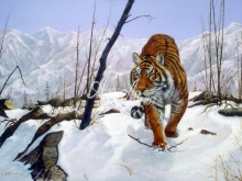 6068_60x40-tigr-zimoj