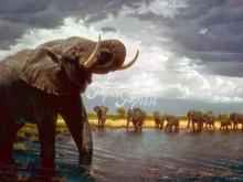 6072_60x40-slony-na-vodopoe