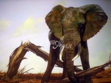 6074_60x40-afrikanskaya-sila