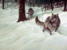 6092_60x40-zimnie-volki