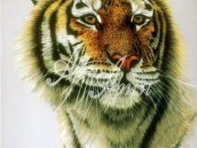 6109_42x30-tigr-s-karimi-glazami