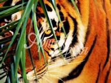 6132_60x40-vysmatrivayushhij-tigr