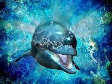 6134_66x50-delfin-i-cherepaxi