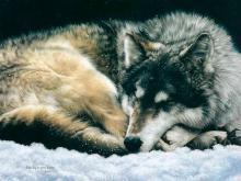 6146_Одинокий волк_50х40