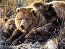 6158_Медвежья семья_50х37